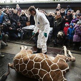 """Reuters""/""Scanpix"" nuotr./Kopenhagos zoologijos sode nušauta žirafa"
