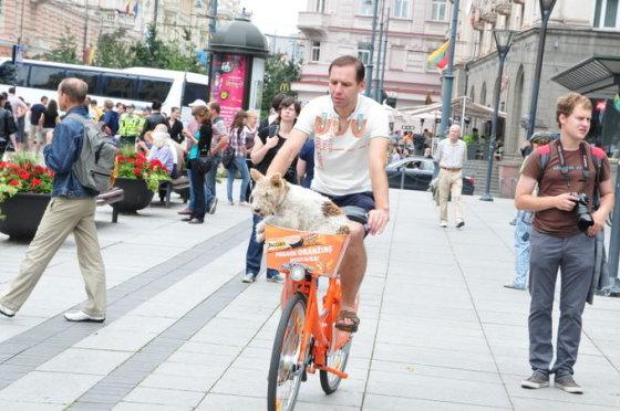 Oranžiniais dviračiais važinėjosi ir dviratininkai, ir net gyvūnai.