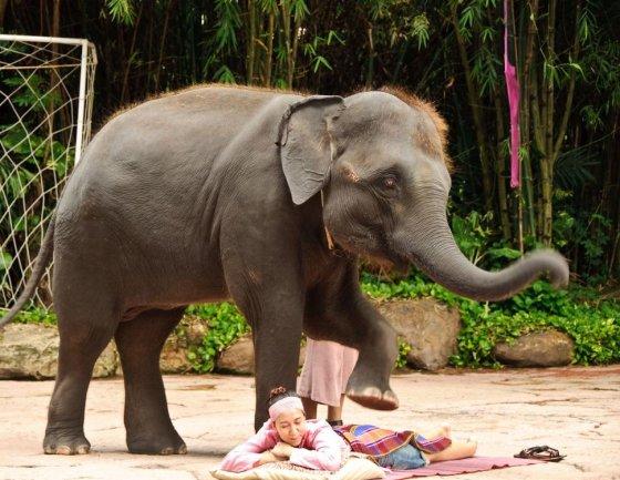123rf.com nuotr./Dramblys atliks tailandietišką masažą