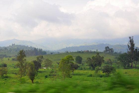 M.Vadišio nuotr./Ugandos kalnai ir slėniai