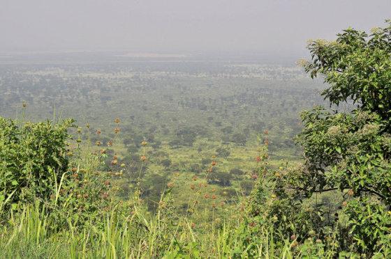 M.Vadišio nuotr./Žalios Ugandos savanos