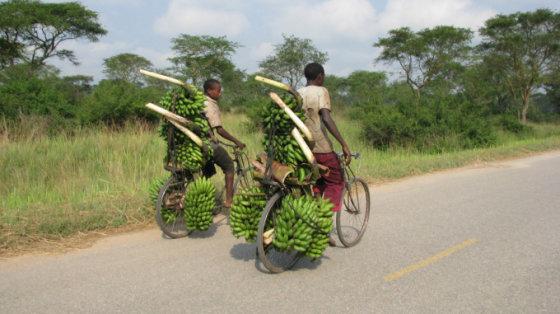 A.Podgornajos nuotr./Bananai - daugelio kaimo žmonių pragyvenimo šaltinis