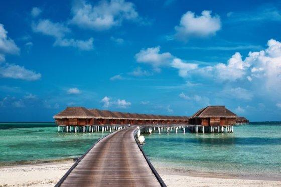 Shutterstock nuotr./Maldyvai