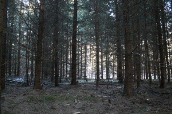 Tomo Markelevičiaus nuotr./Sacharos miškas