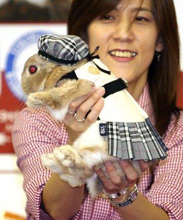 Японский маскарад Кроликов. Комментарии : Блоги Новой газеты