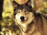 Photos.com/Vilkas
