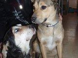 Gyvūnų globėjų asociacijos nuotr./Nuo paauglių nukentėję šuneliai šiuo metu saugūs gyvūnų globėjų rankose.
