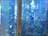 Poezija akvariume