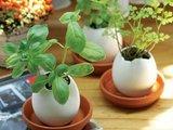 """eggling.com nuotr./Iš kiaušinio """"išsiritantys"""" augalai"""