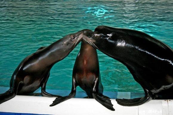 Jūrų muziejaus nuotr./Meilumo akimirka.