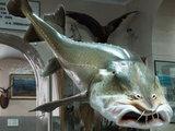 А самая длинная рыба имеет длину - 17 метров (гигантская акула -20 метров).  Её зовут сельдяной король.