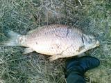 15min.lt skaitytojo T.Venckaus nuotr./Kalotės ežere, nutirpus sniegui, į paviršių išniro išdususios žuvys.