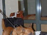 Muitinės nuotr./Muitinės tarnybinis šuo