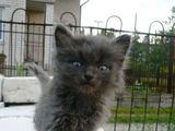 LGGD nuotr./Pilkas kačiukas