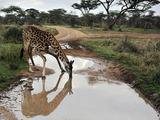 "AFP/""Scanpix"" nuotr./Tanzanijoje"