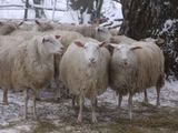 Irmanto Gelūno/15min.lt nuotr./Bendra kalba su avimis.