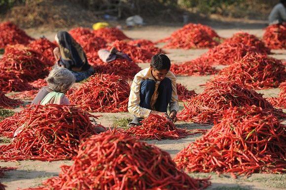 Scanpix nuotr./Gyvenimas Indijoje