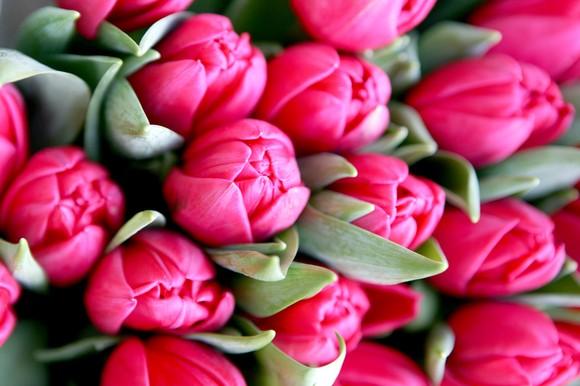 Dia da Mãe - Día de la Madre - Mamos diena - Mother´s Day 2016