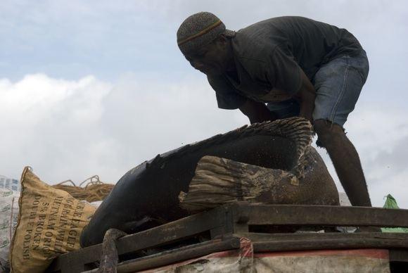 123rf.com nuotr./Zanzibaro žvejys atgabeno parduoti galingą laimikį