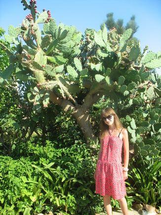 V.Ulevičiūtės nuotr./`alia milžiniako kaktuso
