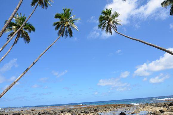 L.Dapkus/Kokoso palmės ir vandenynas