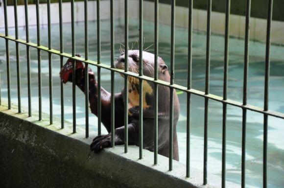 Greitgrisim.lt/Manauso miesto zoologijos sodo gyventojas
