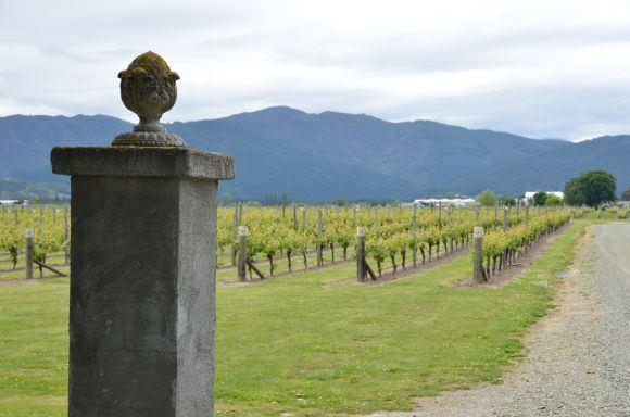 Liudas Dapkus/Cloudy Bay vynuogynai