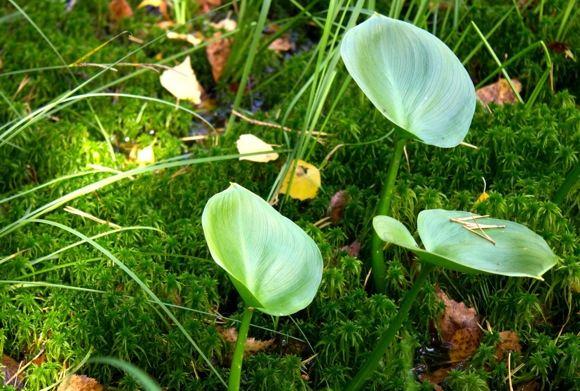 Augalai Dubravos rezervatinėje apyrubėje