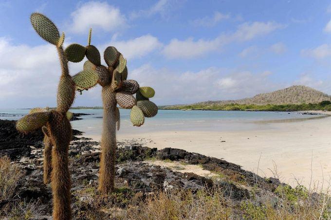 """""""Scanpix"""" nuotr./Galapagų salos"""