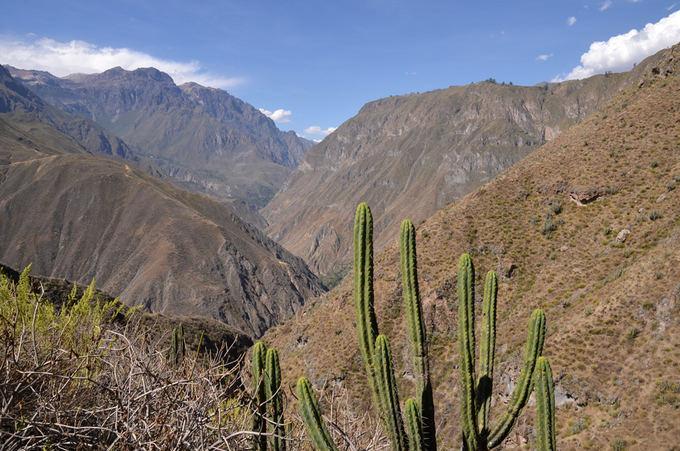 Lost Latinos nuotr. /Andų kalnai