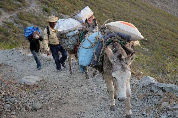 Lost Latinos nuotr. /Kalnų gyvenimas