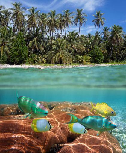 123rf.com nuotr./Kuboje dera visas gamtos grožis