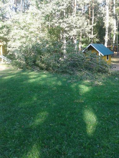 15min.lt skaitytojo Rimanto nuotr./Rugsėjį vaikų darželio teritorijoje nuvirtęs medis