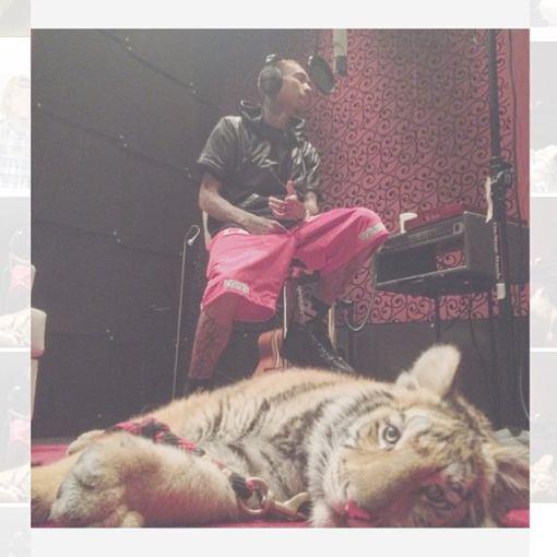 Instagram nuotr./Reperio Tygos tigras