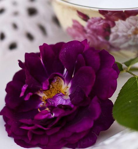 Nijolės Karpavičienės nuotr./\'Tuscany Superb\' rožės