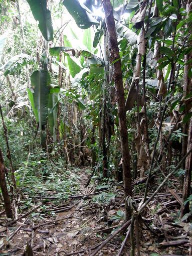 G.Juodpusio nuotr./Ekspedicija Venesueloje – pas atokią janomamų gentį