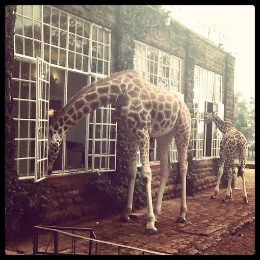 """Facebook.com nuotr./""""Giraffe Manor"""" viešbutis"""