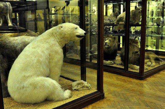 "Muziejaus nuotr./""Natural History Museum Tring"""