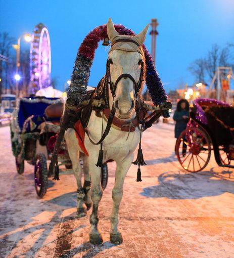 Žiemos miestelyje netrūksta pramogų. Viena jų – arklių traukiamos karietos