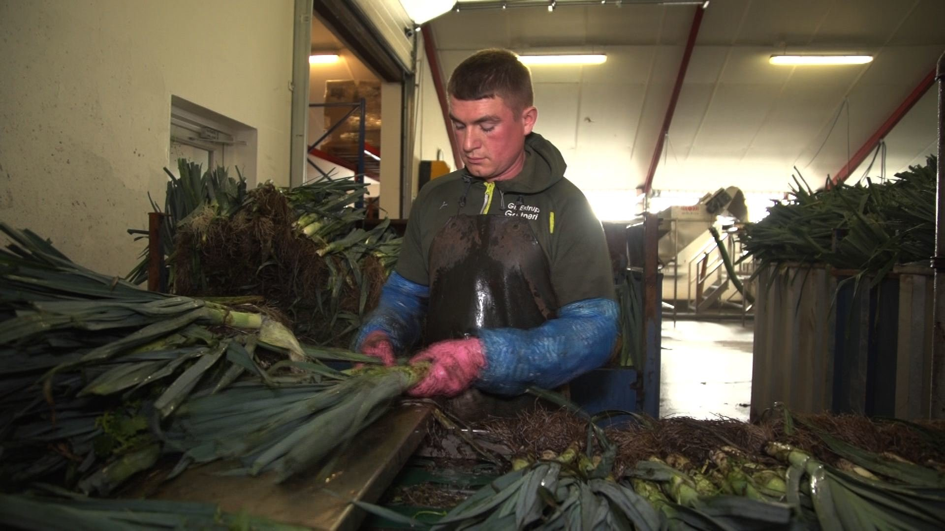 Darbas danijoje morku fabrike